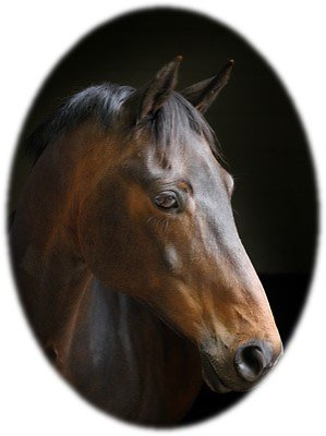 Equine Healing / Animal Healing. Horse head circle